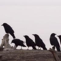 Јово Вукелић: Лете јата црних гавранова над Србијом