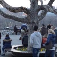 Михаило Меденица: Секу и руше себе јер су пањеви који никад нису били дрво
